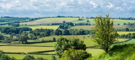 Agri Landscape
