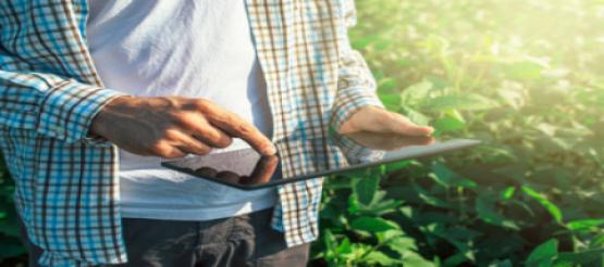 farmer using ipad for accounting