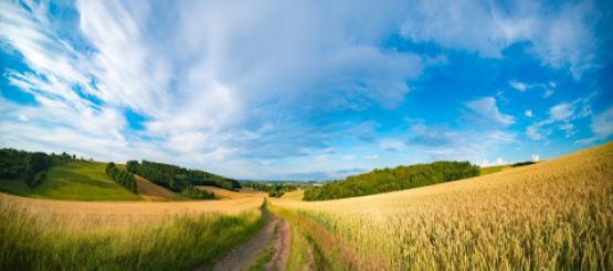 Undulating Farmland fields