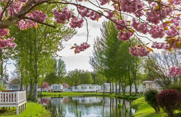 Caravan park with tree in blossom
