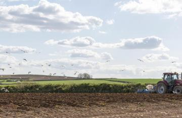 Tractor ploughing farmland with birds flying in sky