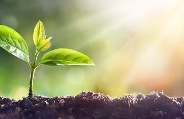 Seedling growing in the sun